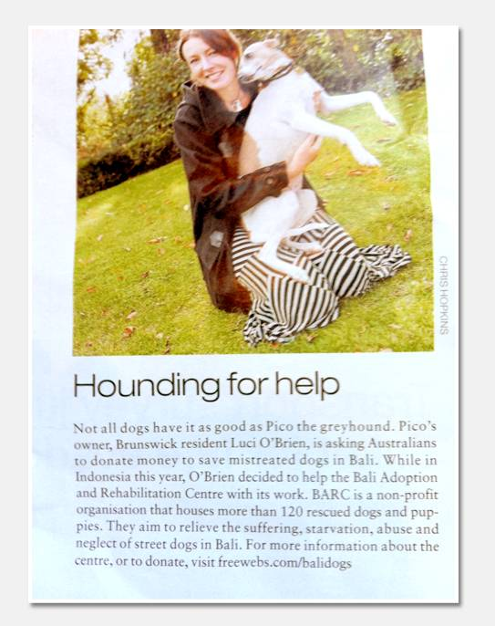 Melbourne Times ~ A call to support the dogs in Bali