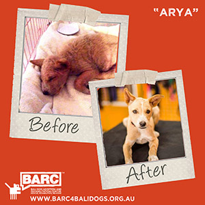 Before & After Arya