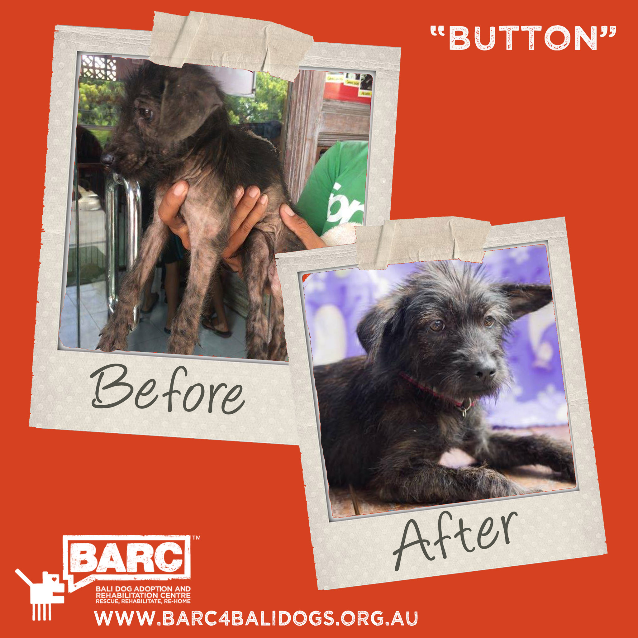 Before & After Button