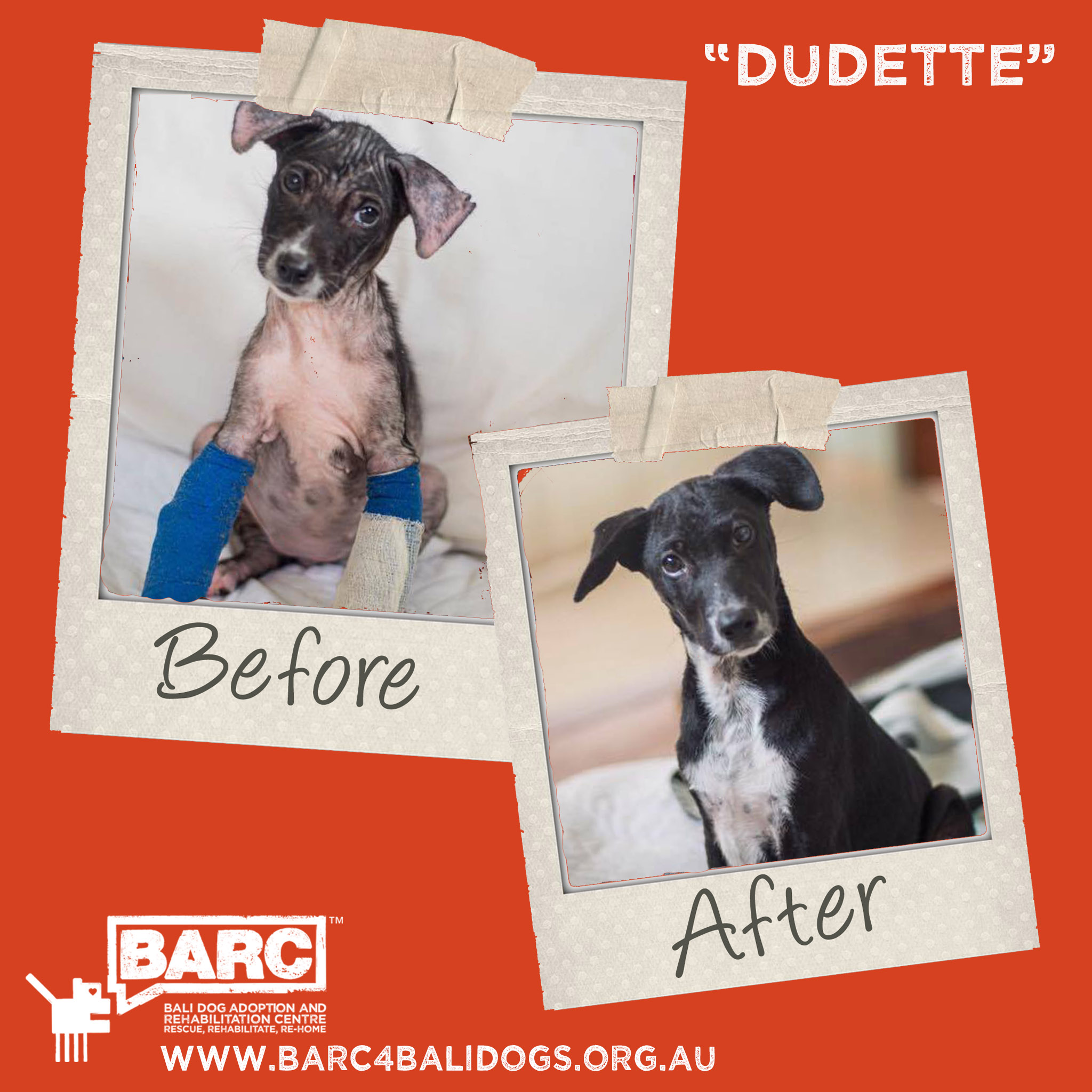 Before & After Dudette