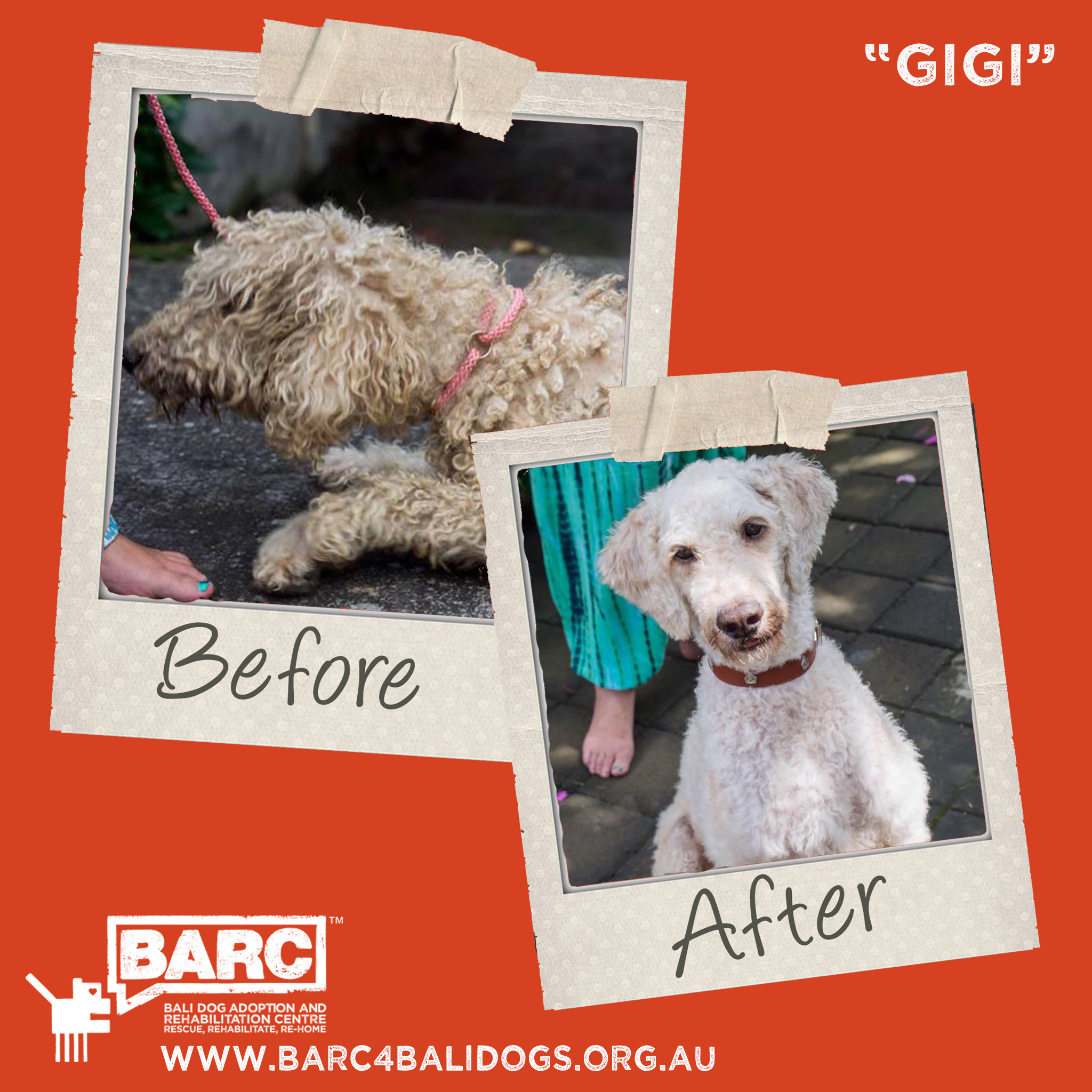 Before & After Gigi