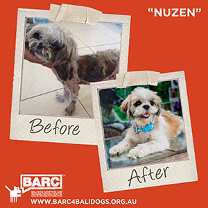 Before & After Nuzen