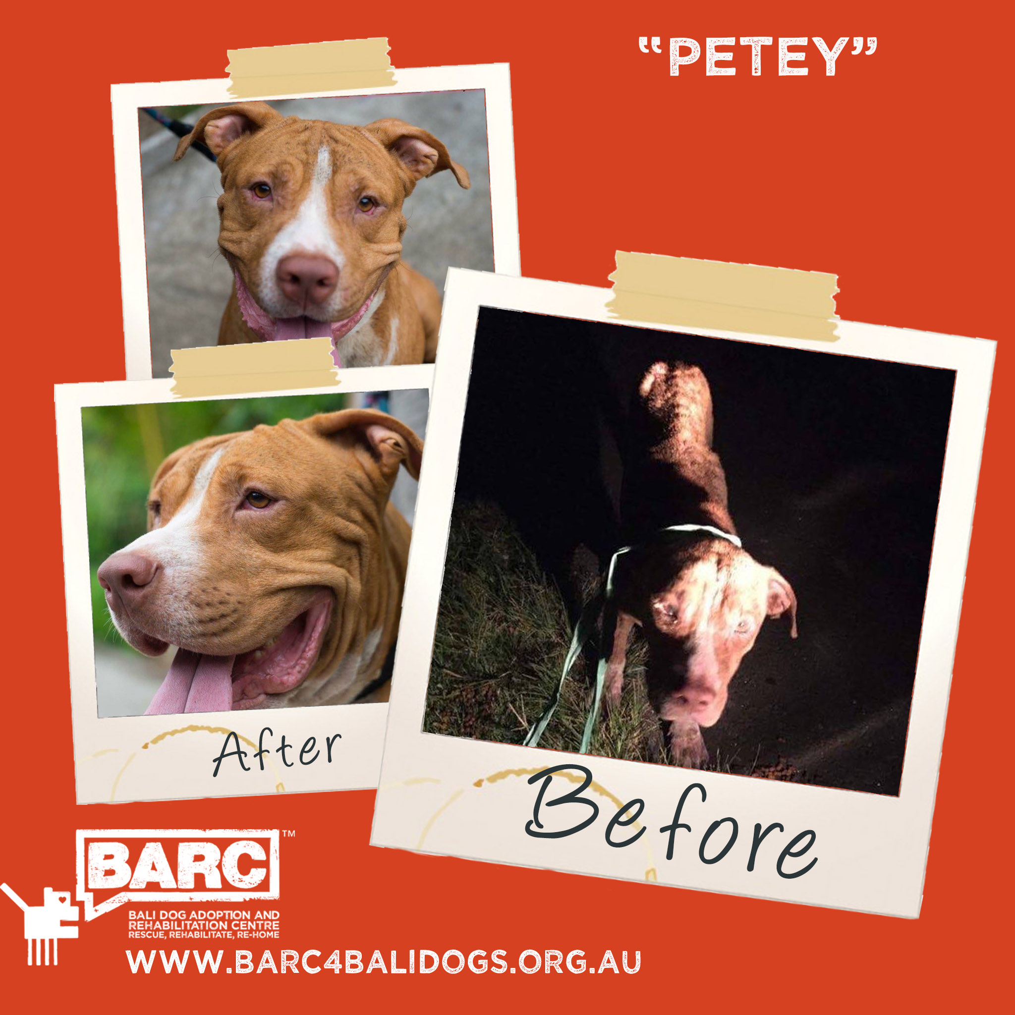 Before & After Petey