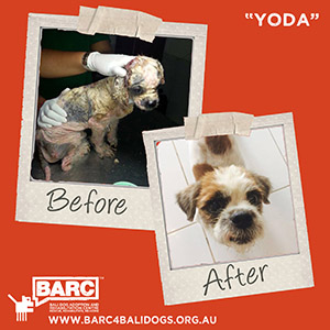 Before & After Yoda