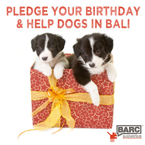 Pledge your birthday and help Bali Dogs