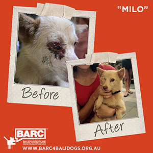 Before & After Milo