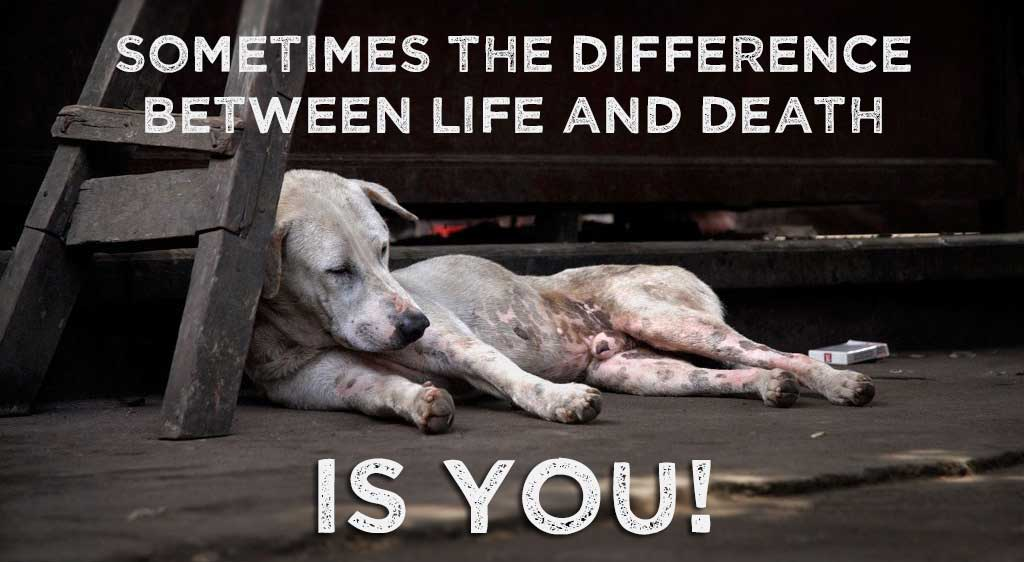 Sometimes the difference between life and death... Is YOU!