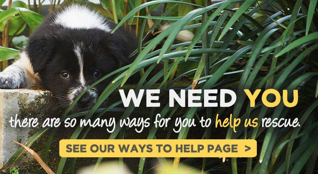 We need you! There are so many ways for you to help us rescue. See our ways to help page